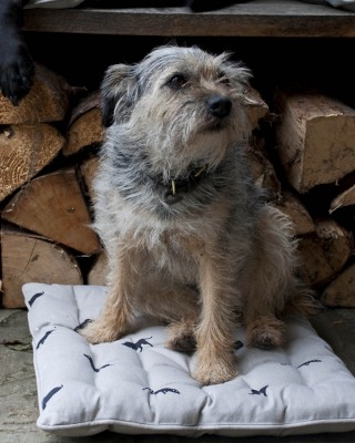 Terrier Chair Pad